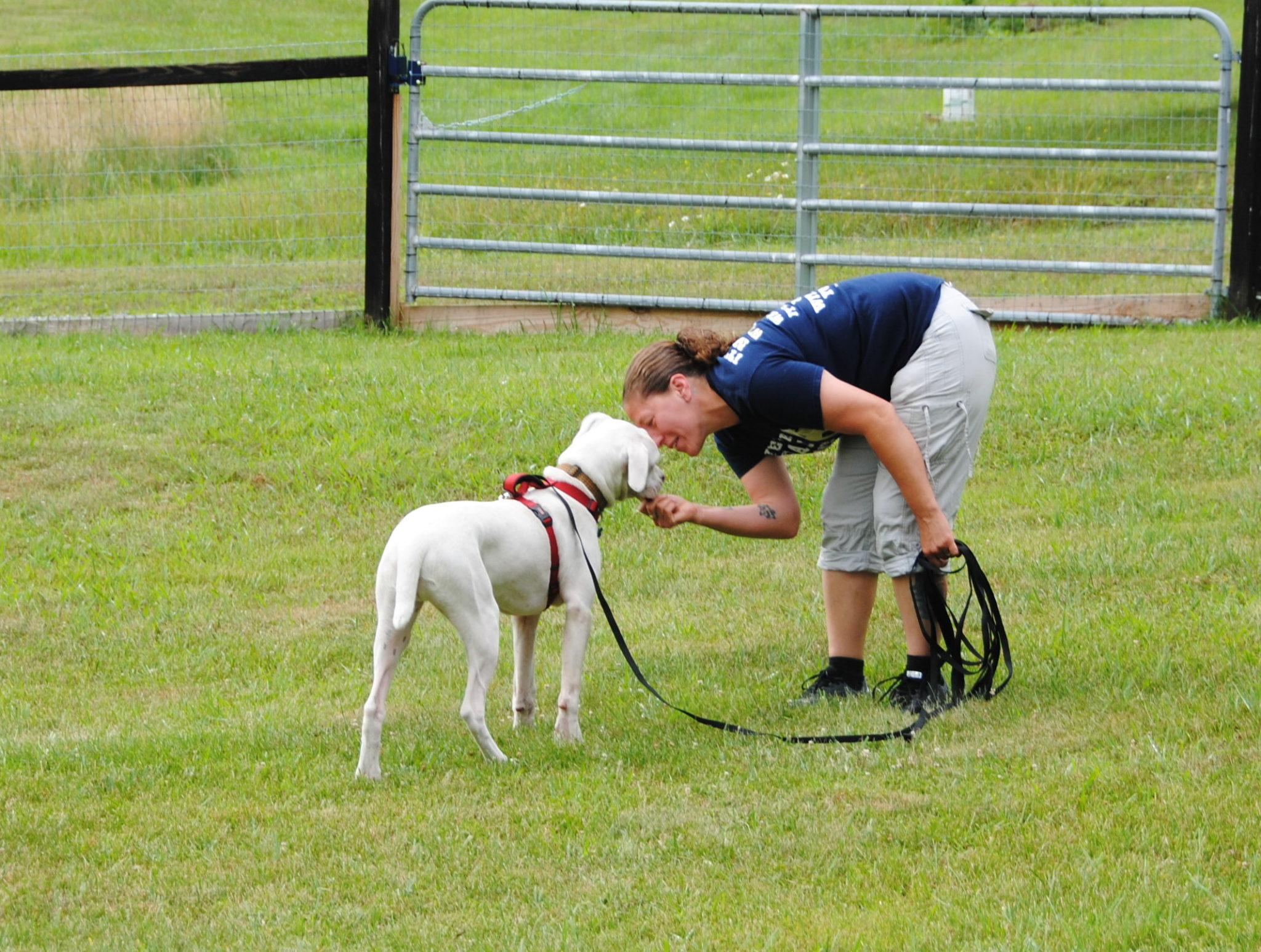 Recall Training For Deaf Dogs Deaf Dogs Rock