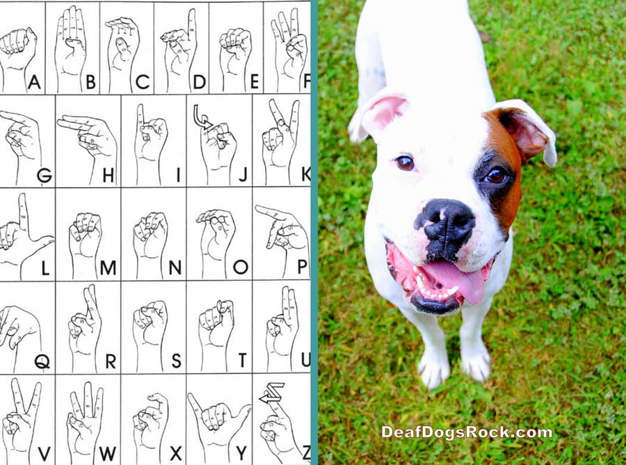 Beginning Sign Training Deaf Dogs Rock