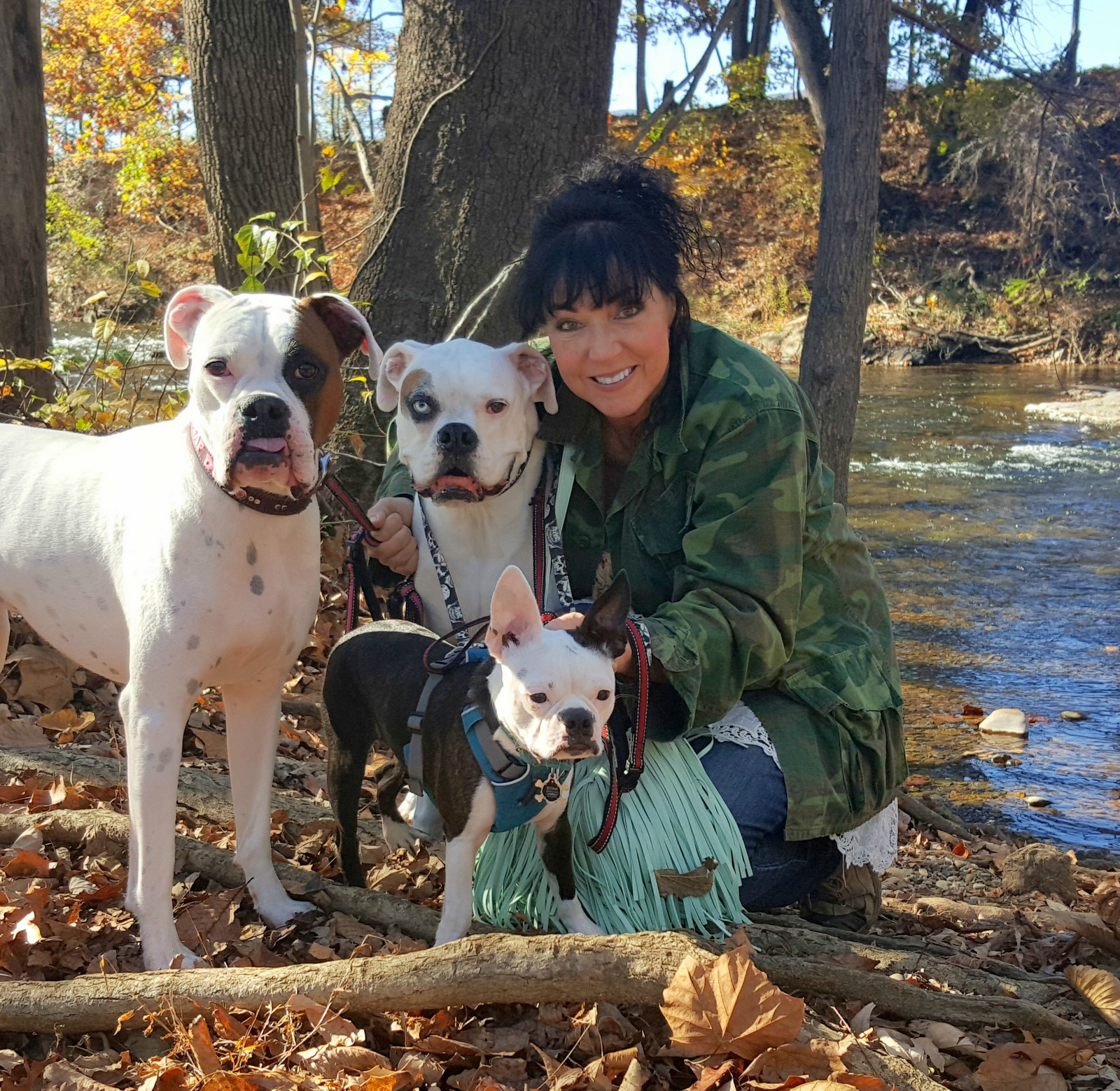 Tether Training Your Deaf Dogs Deaf Dogs Rock